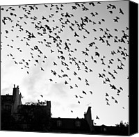 Flock Of Birds Canvas Prints - Flock Of Bird Flying Canvas Print by Miles Lau