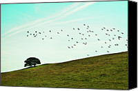 Flock Of Birds Canvas Prints - Flock Of Birds Canvas Print by Where Photography meets Graphic Design.