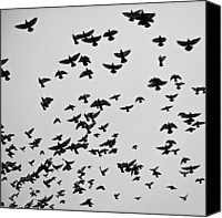 Flock Of Birds Canvas Prints - Flock Of Flying Pigeons Canvas Print by Photography by Ellen L. Soohoo