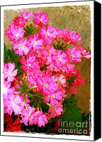 Judi Bagwell Canvas Prints - Flocks of Phlox Canvas Print by Judi Bagwell
