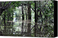 Lush Foliage Canvas Prints - Flooded Amazon Rainforest Canvas Print by Oliver J Davis Photography