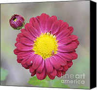 Still Life Canvas Prints - Floral Canvas Print by Cindy Lee Longhini