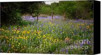Texas Bluebonnets Canvas Prints - Floral Pasture No. 2 Canvas Print by Jon Holiday