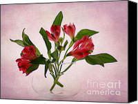 Macro Photography Canvas Prints - Floral Still Life Canvas Print by Kristin Kreet