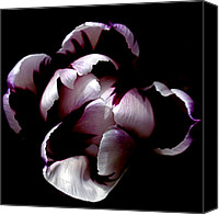 Tulips Canvas Prints - Floral Symmetry Canvas Print by Rona Black