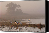 Fine Arts Photography Canvas Prints - Florida Everglades Wood Storks Canvas Print by Juergen Roth