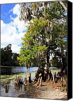 Cypress Knees Canvas Prints - Florida Landscape - Lettuce Lake Canvas Print by Carol Groenen