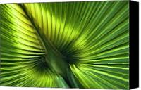 Ribs Canvas Prints - Florida Palm Frond Canvas Print by Carolyn Marshall