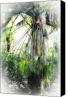 Treescape Canvas Prints - Florida Palms Canvas Print by Carolyn Marshall