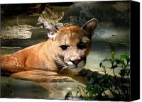 Mountain Lion Digital Art Canvas Prints - Florida Panther Canvas Print by Grace Dillon