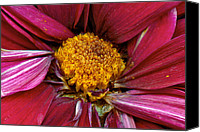 Scanned Canvas Prints - Flower - At the center of it all Canvas Print by Mike Savad