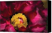 Pink Flower Canvas Prints - Flower - Peony Canvas Print by Mike Savad