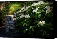 Spring Scenes Canvas Prints - Flower - Rose - By a wall  Canvas Print by Mike Savad