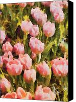Tulips Canvas Prints - Flower - Tulip - A field of pink Canvas Print by Mike Savad