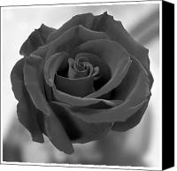 Black Rose Canvas Prints - Flower 4 Canvas Print by Mike McGlothlen