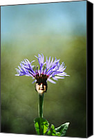 Bluet Canvas Prints - Flower Child Canvas Print by Rebecca Sherman