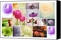 Potography Canvas Prints - Flower Collage 2 Canvas Print by Kristin Kreet