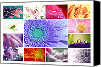 Potography Canvas Prints - Flower Collage 3 Canvas Print by Kristin Kreet
