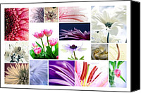 Potography Canvas Prints - Flower Collage Canvas Print by Kristin Kreet