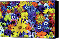 Arrangement Painting Canvas Prints - Flower Garden 1 Canvas Print by JQ Licensing