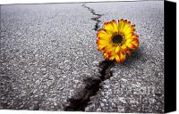 Growth Photo Canvas Prints - Flower in asphalt Canvas Print by Carlos Caetano