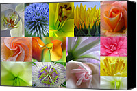 Close Up Canvas Prints - Flower Macro Photography Canvas Print by Juergen Roth