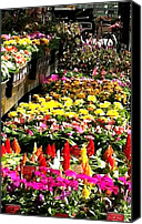 Vinca Flowers Canvas Prints - Flower Market Canvas Print by Elizabeth Coats