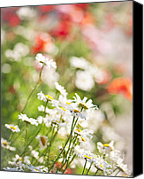 Daisies Flowers Canvas Prints - Flower meadow Canvas Print by Elena Elisseeva