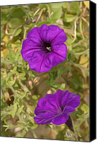 Photo Digital Art Canvas Prints - Flower Painting 0006 Canvas Print by Metro DC Photography