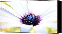 Robert Anderson Photo Canvas Prints - Flower Petels Canvas Print by Robert Anderson