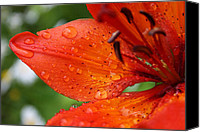 Bold Colors Canvas Prints - Flower Photograph Orange Alaskan Flower PASSION by MADART Canvas Print by Megan Duncanson