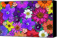 Arrangement Painting Canvas Prints - Flower Pond Canvas Print by JQ Licensing
