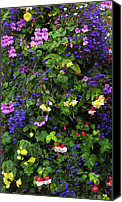 Fushia Canvas Prints - Flower Power Canvas Print by Kurt Van Wagner