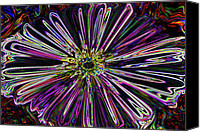 10:7 Canvas Prints - Flower Powered  Canvas Print by Kenneth James