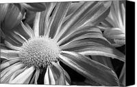 Digital Posters Photo Canvas Prints - Flower Run through It Black and white Canvas Print by James Bo Insogna