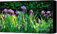 Renata Ratajczyk Canvas Prints - Flowering Purple Irises - fine art photography Canvas Print by Renata Ratajczyk