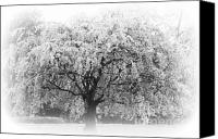 Artyzen Studios Canvas Prints - Flowering Tree in Black and white Canvas Print by ArtyZen Studios