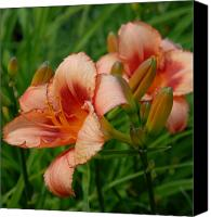 Framed Pink Lily Canvas Prints - Flowers 56 Canvas Print by Joyce StJames