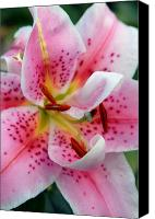 Framed Pink Lily Canvas Prints - Flowers 65 Canvas Print by Joyce StJames