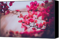 Pink Flower Branch Canvas Prints - Flowers Blossom Canvas Print by Yiu Yu Hoi