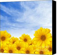 Blossom Canvas Prints - Flowers over Sky Canvas Print by Carlos Caetano