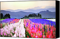 Mountain Scene Canvas Prints - Flowers Tulips In Rows In Fields Canvas Print by John B. Mueller Photography