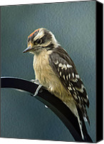 Downy Canvas Prints - Flowing Downy Woodpecker Canvas Print by Bill Tiepelman