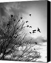 Foreboding Canvas Prints - Flying birds Canvas Print by Elena Elisseeva
