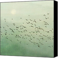 Flock Of Birds Canvas Prints - Flying Flock Of Birds Canvas Print by Laura Ruth