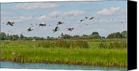 Gans Canvas Prints - Flying geese in a Dutch landscape Canvas Print by Ruud Morijn
