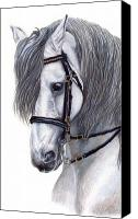 Andalusian Horse Canvas Prints - Focus Canvas Print by Kristen Wesch