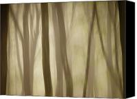 Rikard Olsson Canvas Prints - Foggy forest Canvas Print by Rikard  Olsson
