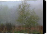 Trees Canvas Prints - Foggy Marsh Canvas Print by Juergen Roth