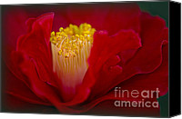 Camellia Canvas Prints - Folds of Red Canvas Print by Jacky Parker